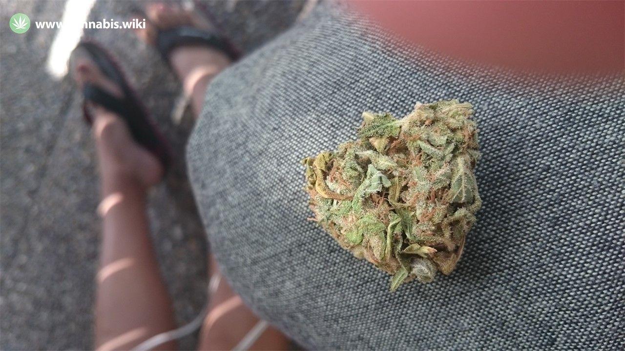 Cannabis Wiki - Strain Misty Kush - Msk - Indica