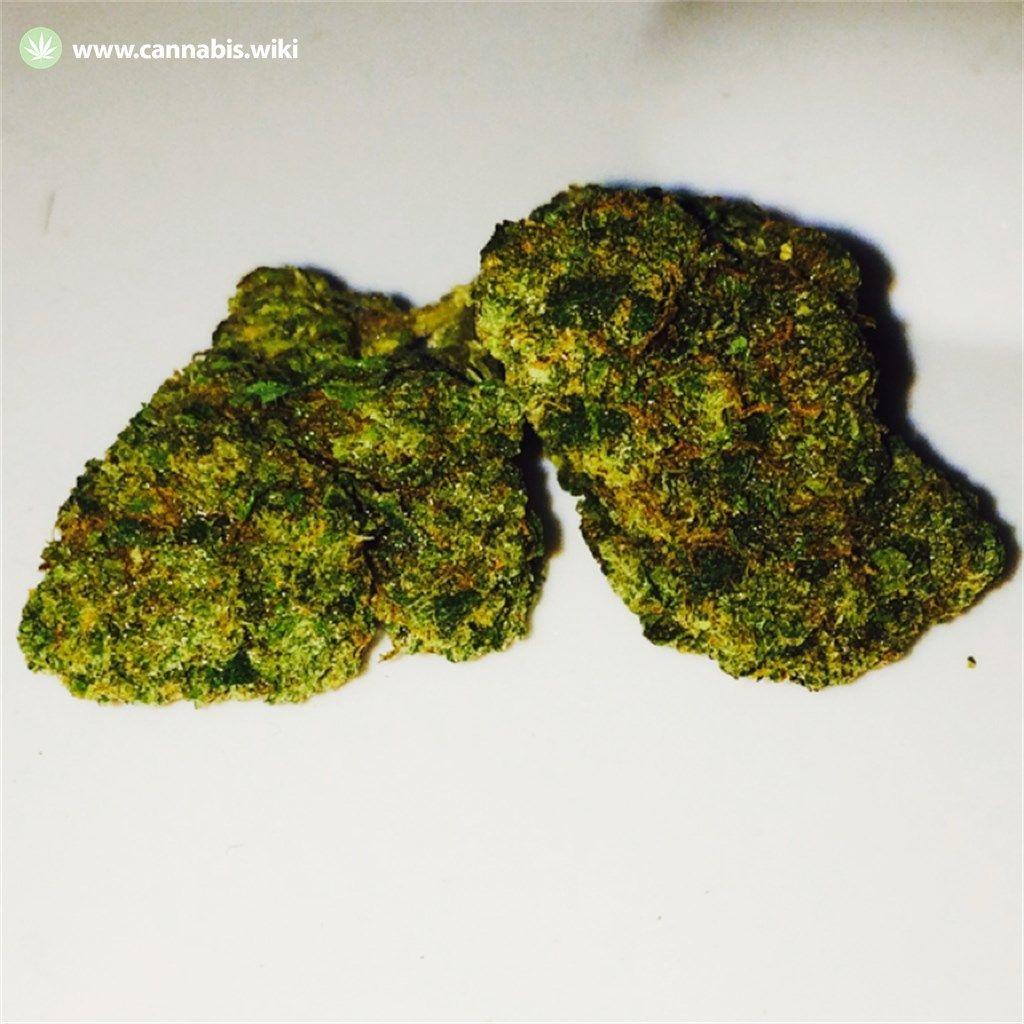 Cannabis Wiki - Strain Mr. Nice - Mr - Indica