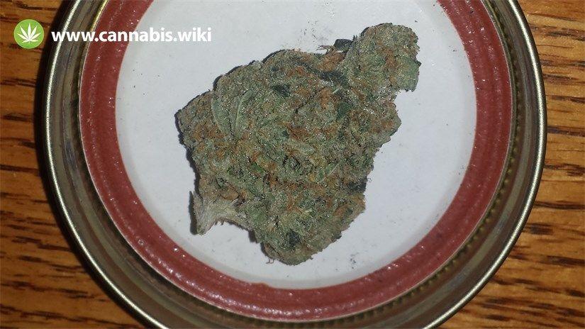 Cannabis Wiki - Strain Neptune Kush - Nk - Indica