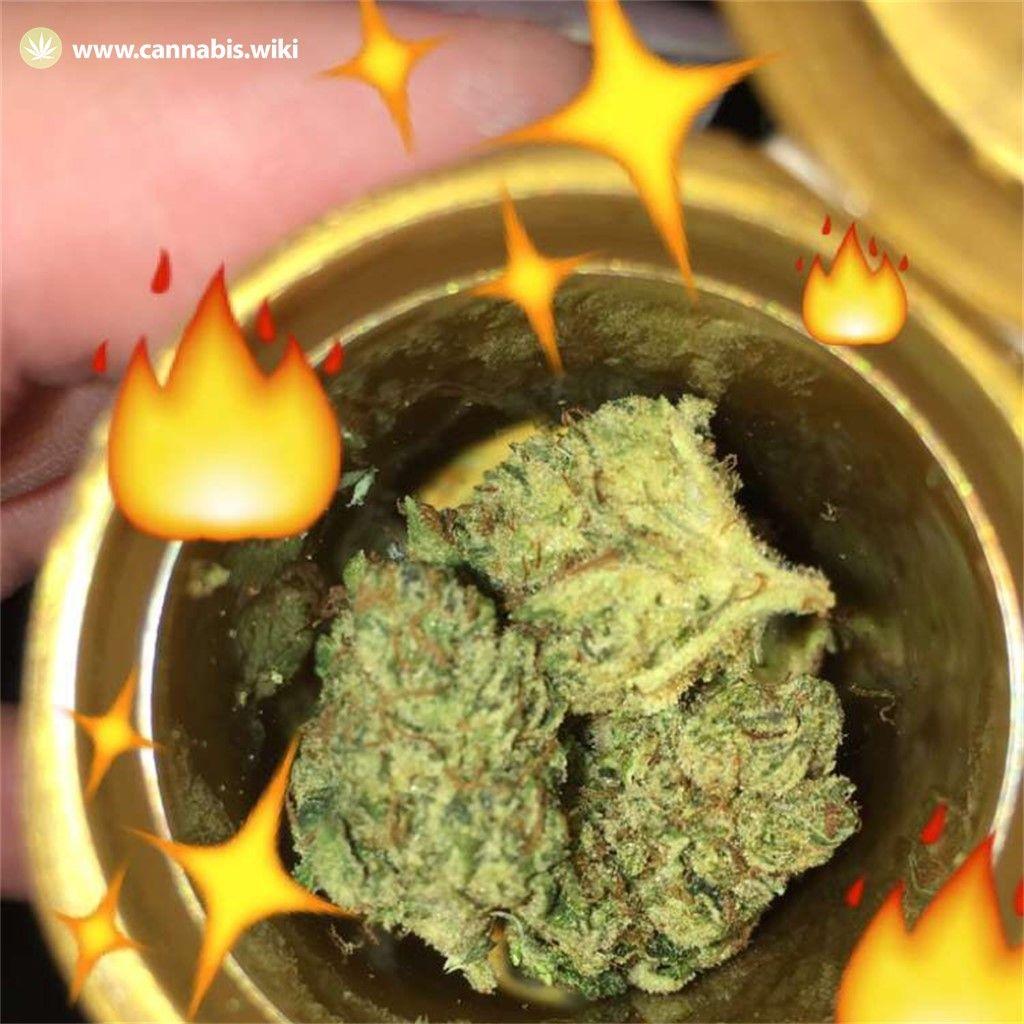 Cannabis Wiki - Strain Neptune OG - Nog - Indica