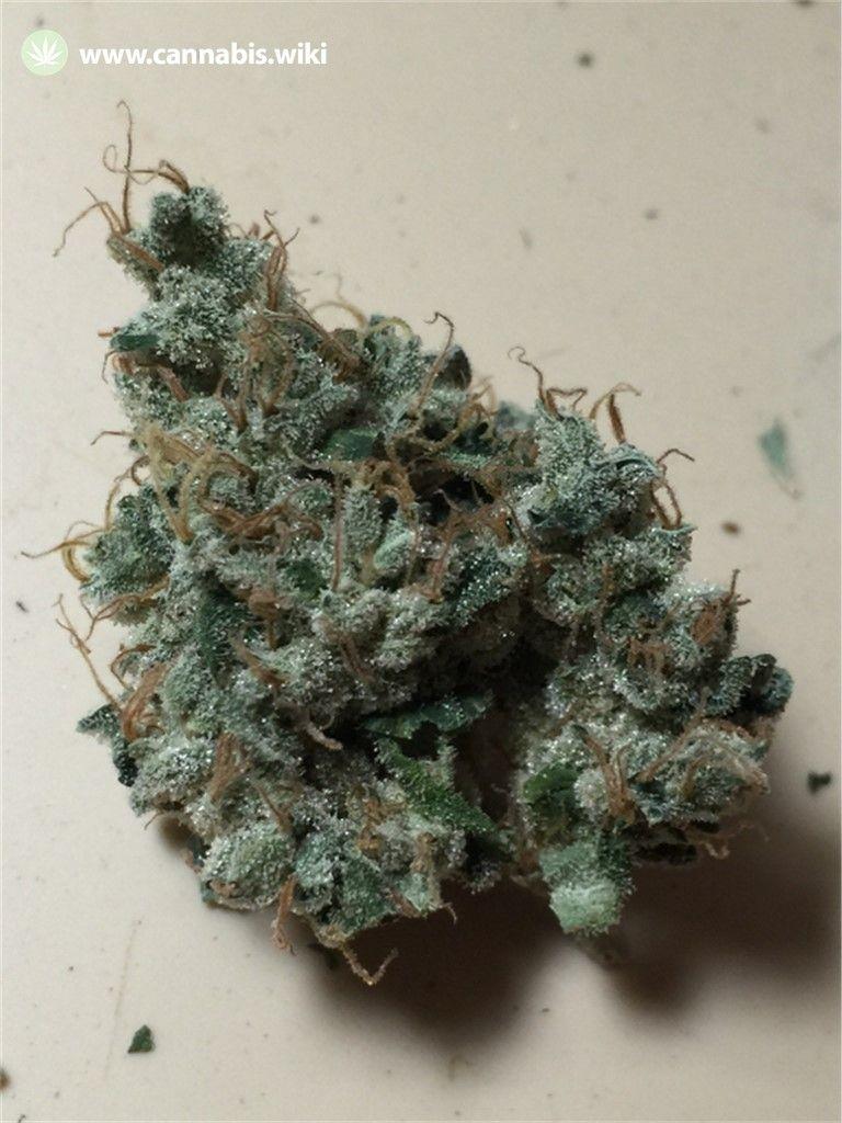 Cannabis Wiki - Strain Night Nurse - Ntn - Indica