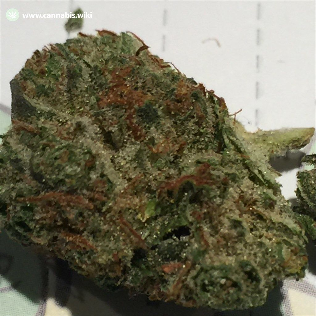 Cannabis Wiki - Strain OG LA Affie - Ola - Indica