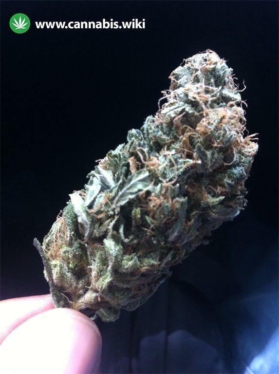 Cannabis Wiki - Strain Ortega - Ort - Indica