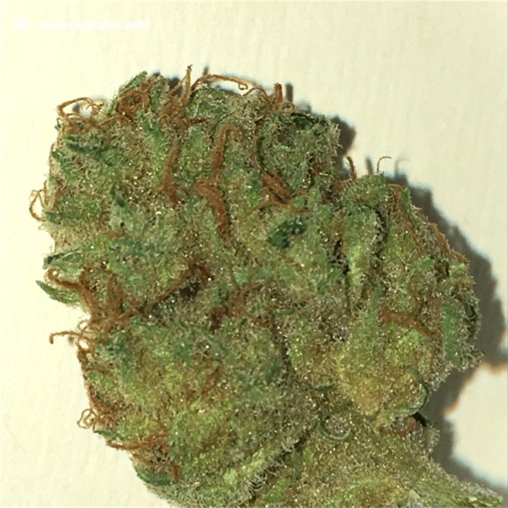 Cannabis Wiki - Strain Pennywise - Pen - Indica