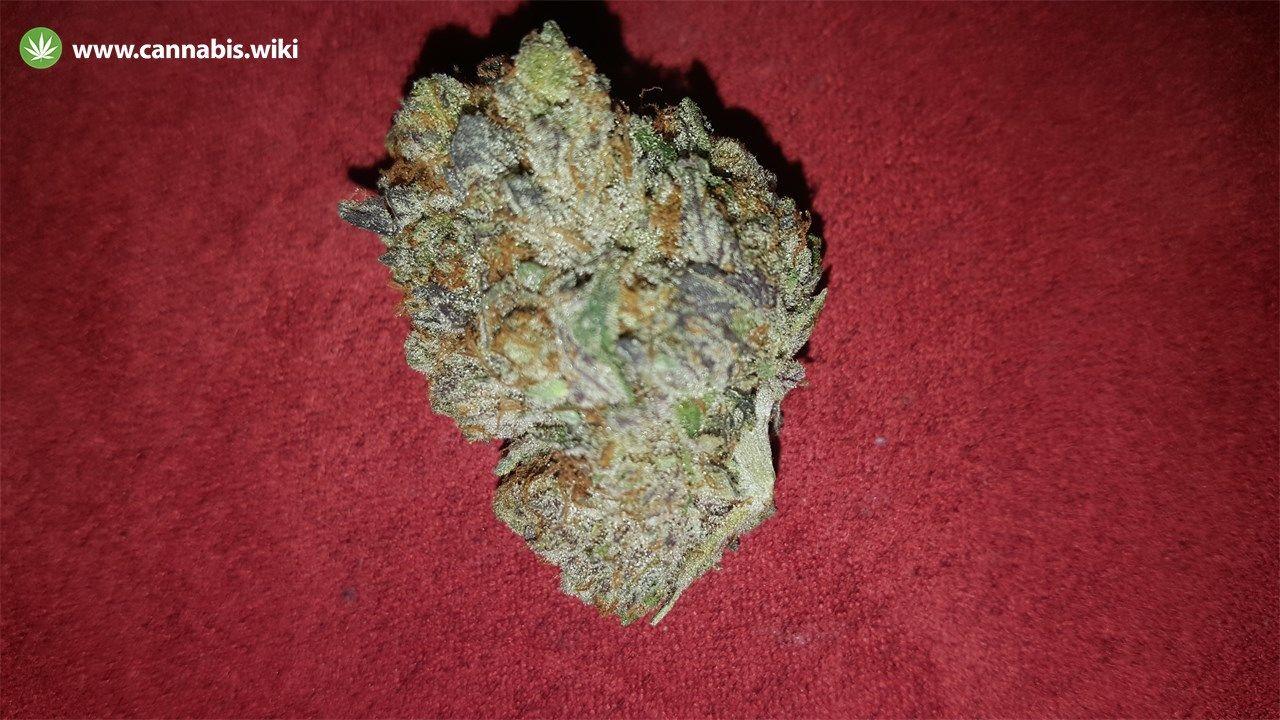 Cannabis Wiki - Strain Pink Champagne - Pkc - Indica