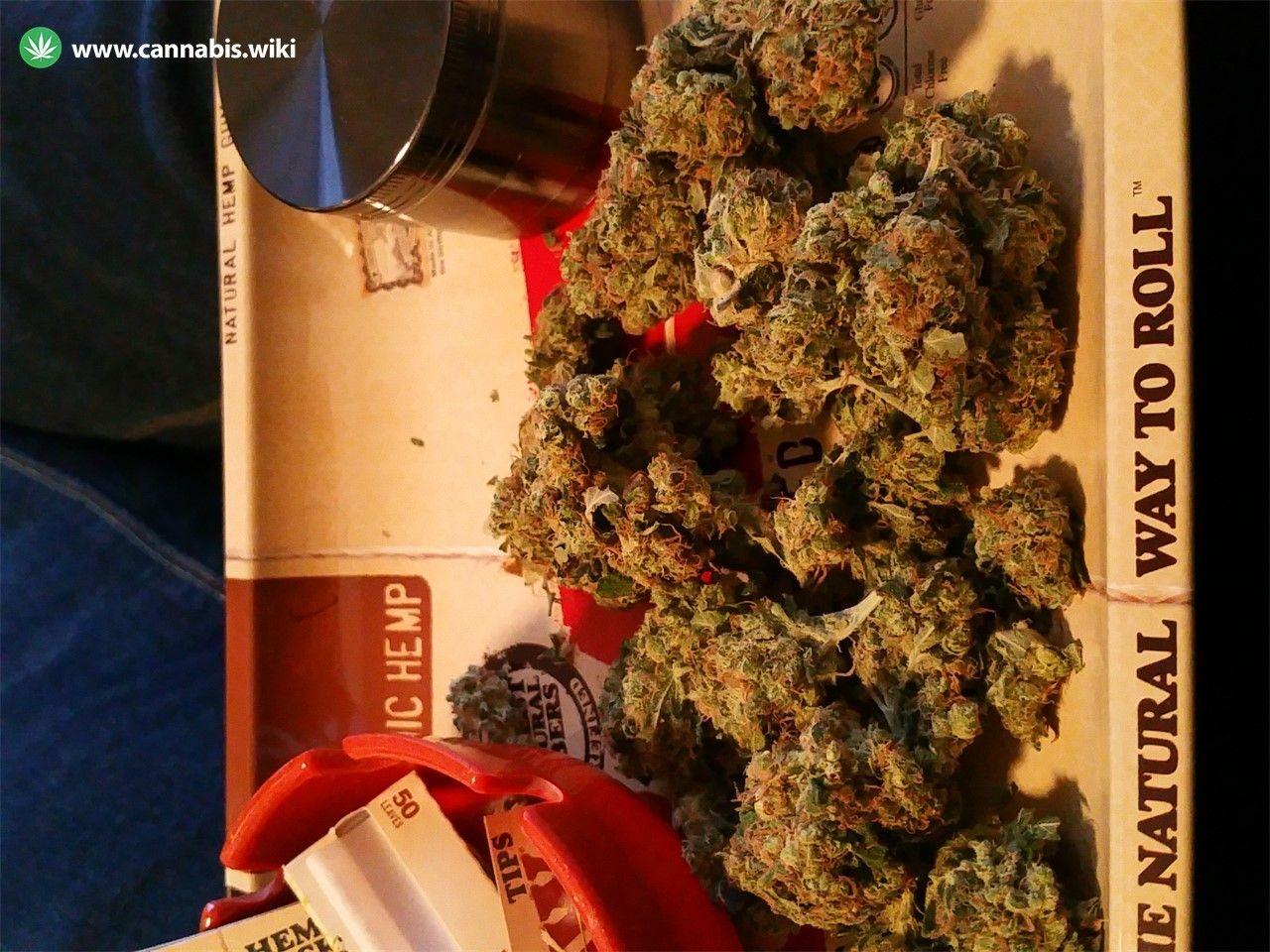 Cannabis Wiki - Strain Popcorn Kush - Pop - Indica