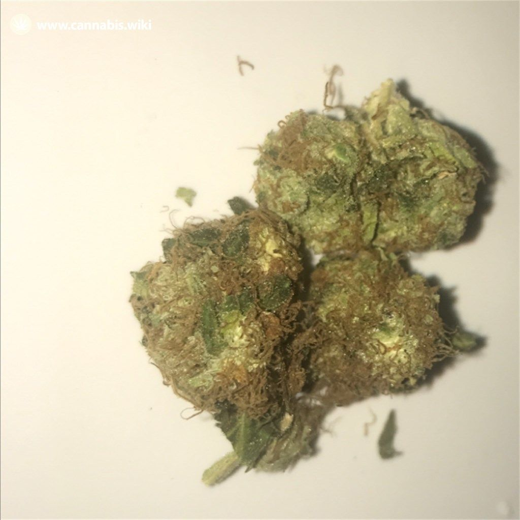 Cannabis Wiki - Strain Pot of Gold - Pog - Indica