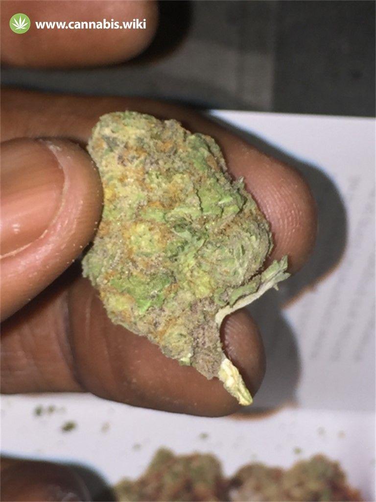 Cannabis Wiki - Strain Purple Bush - Pbu - Indica