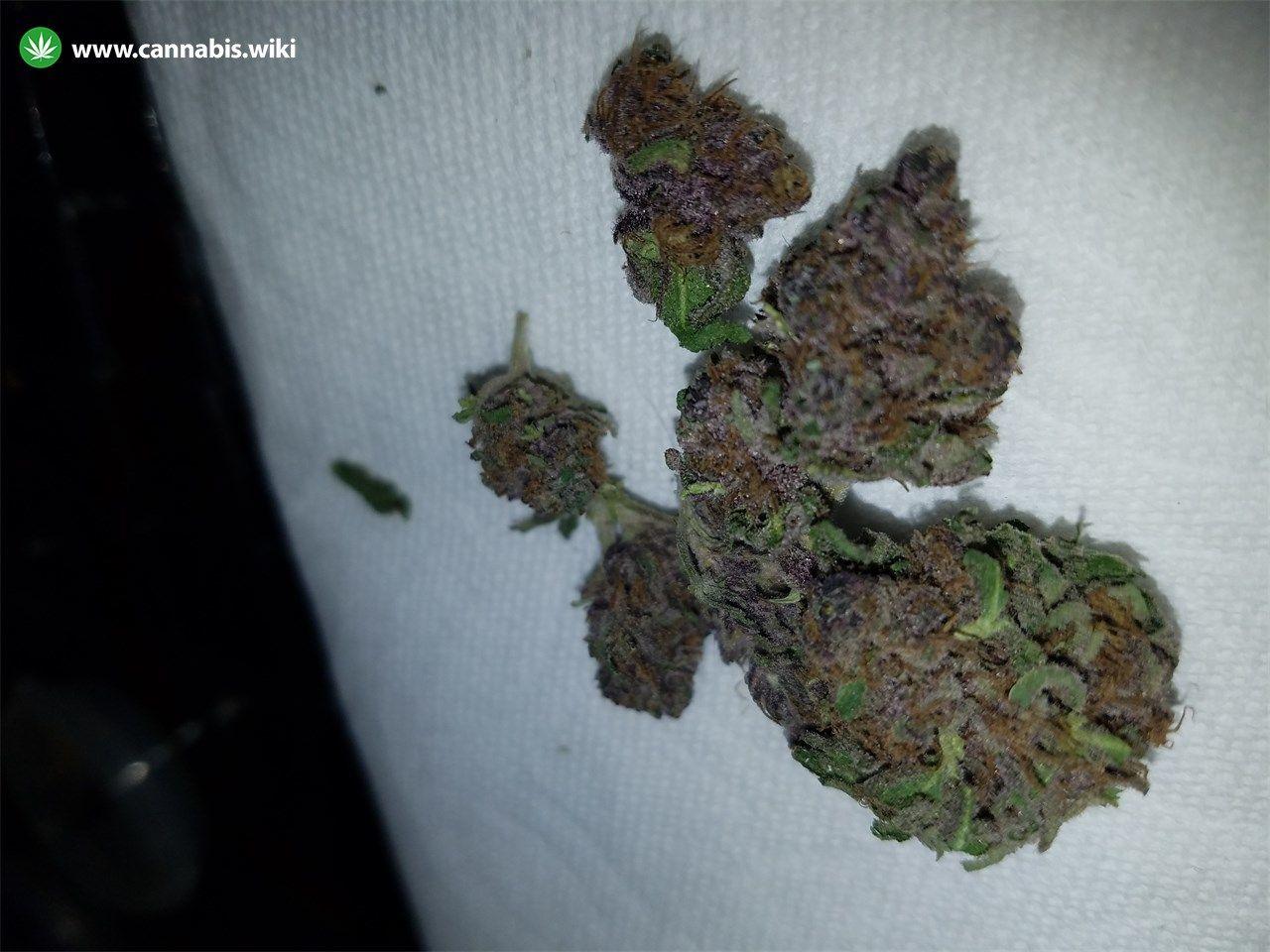 Cannabis Wiki - Strain Purple Elephant - Pe - Indica