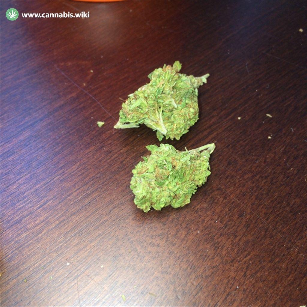 Cannabis Wiki - Strain Sweet Black Angel - Swa - Indica