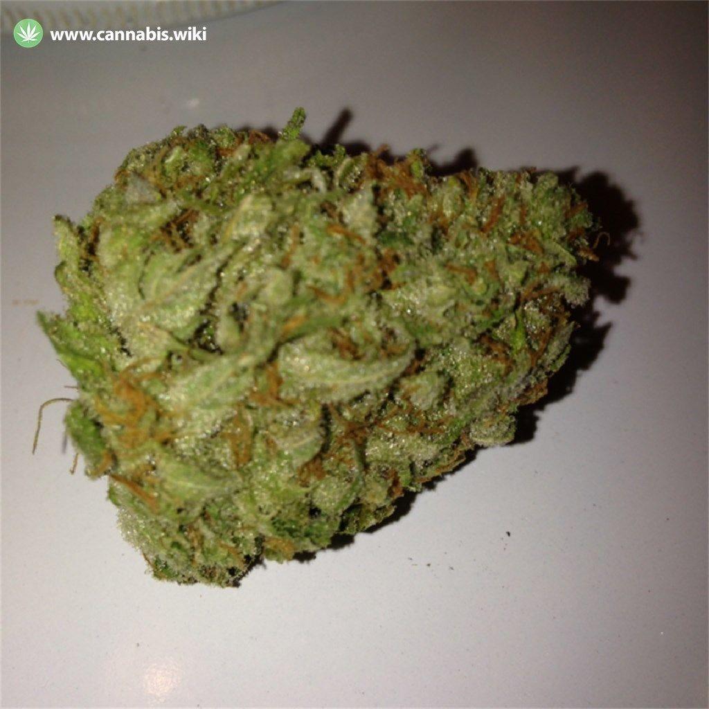 Cannabis Wiki - Strain Cinex - Cnx - Sativa