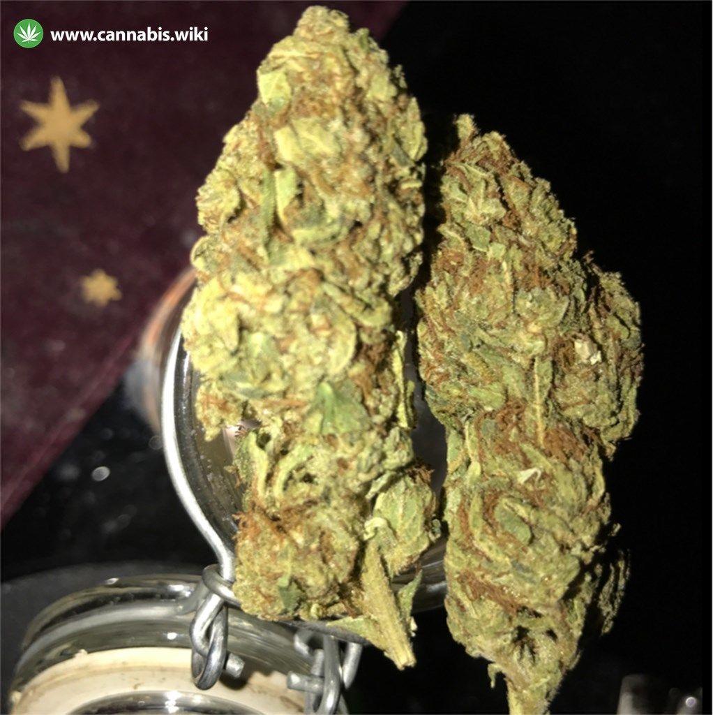 Cannabis Wiki - Strain Durban Poison - Dp - Sativa