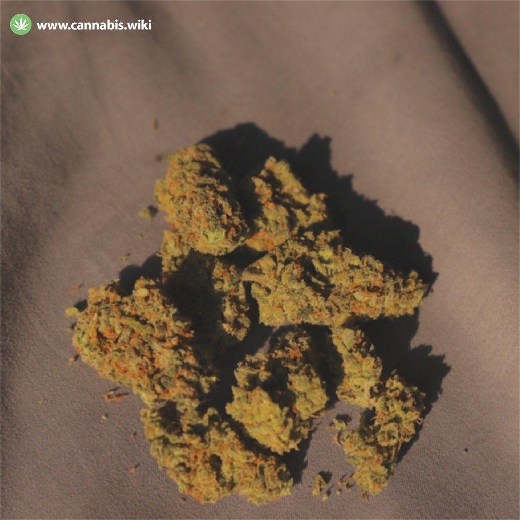 Cannabis Wiki - Strain Jack Herer - Jh - Sativa