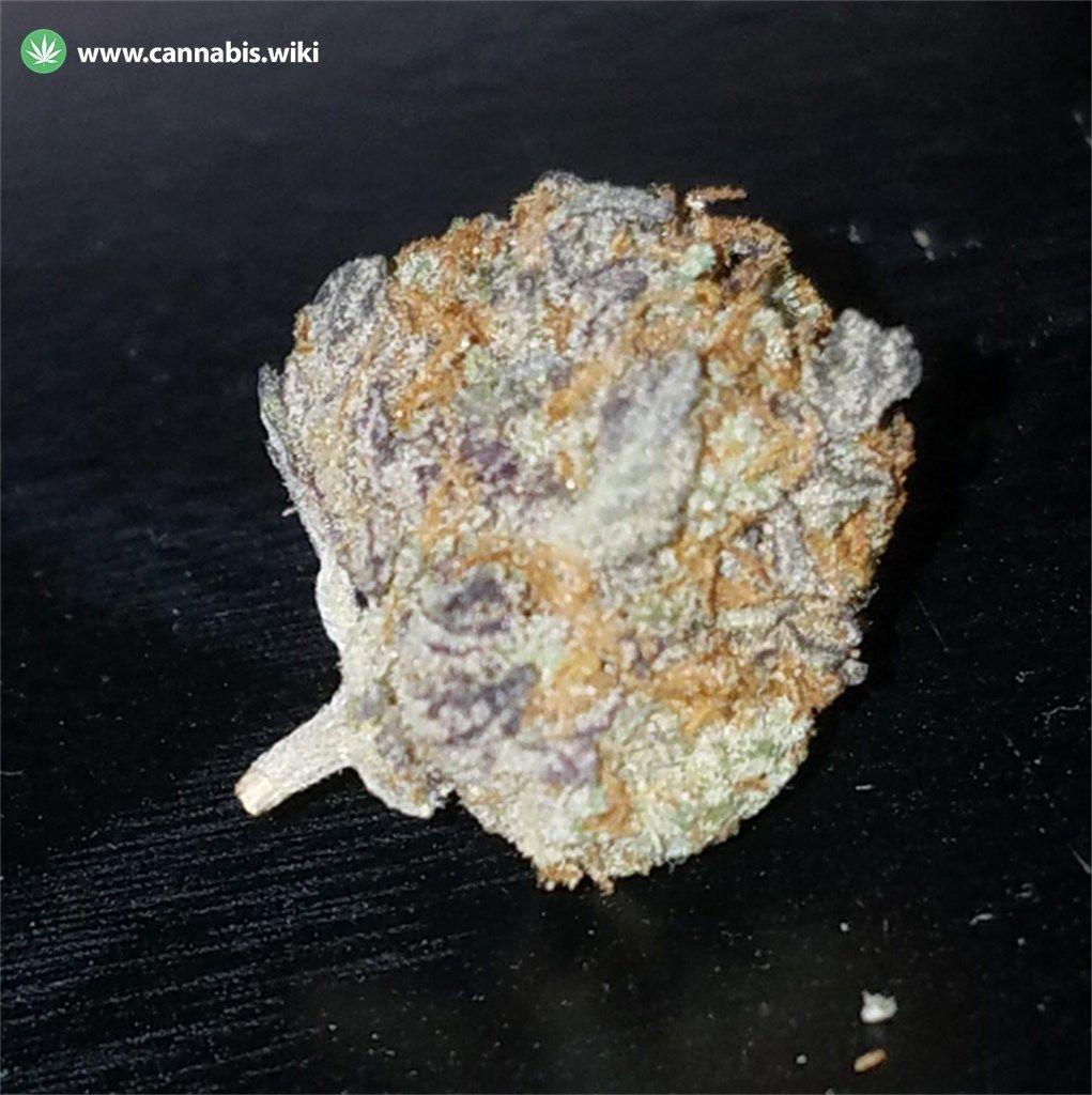 Cannabis Wiki - Strain Strawberry Cough - Sc - Sativa
