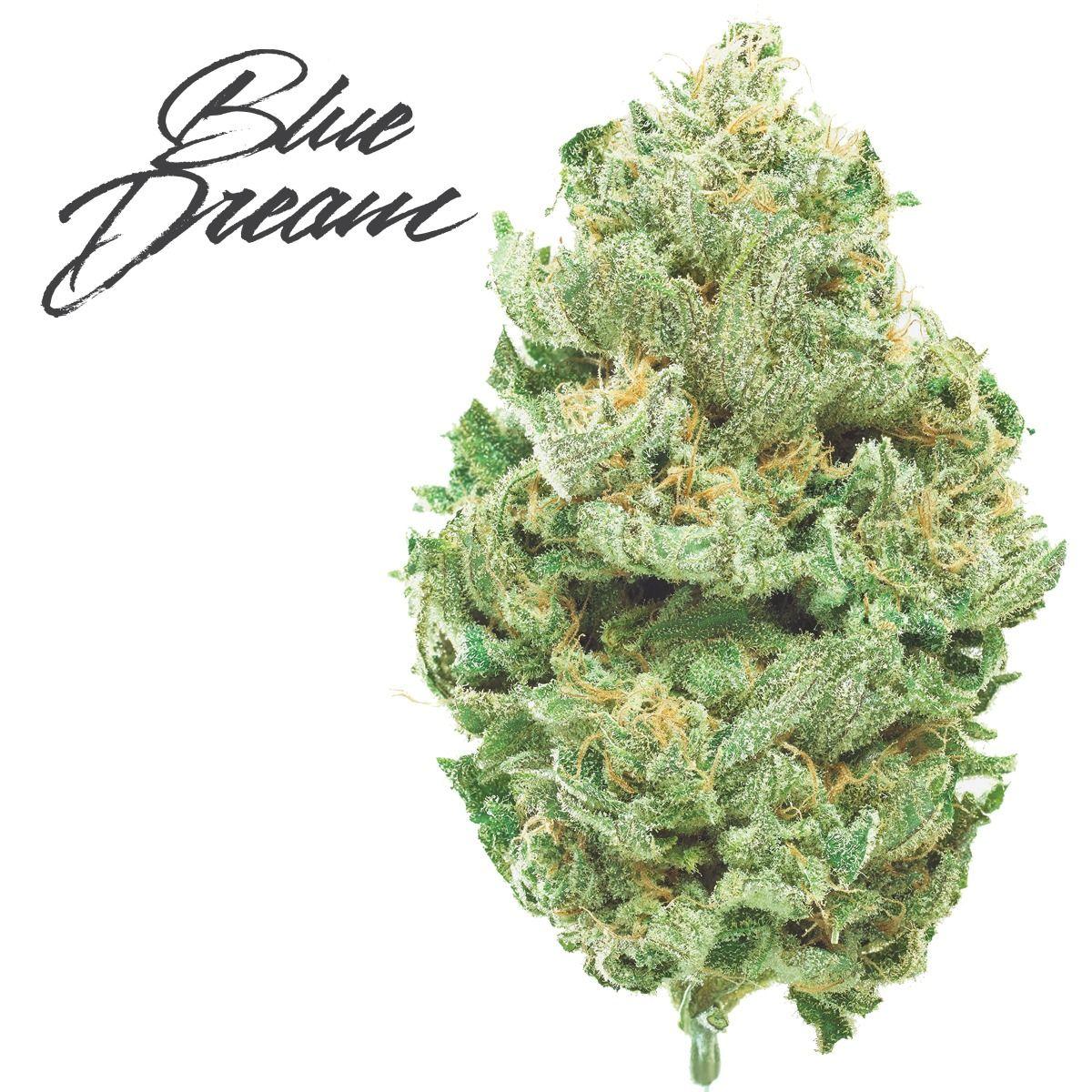 feature image Blue Dream