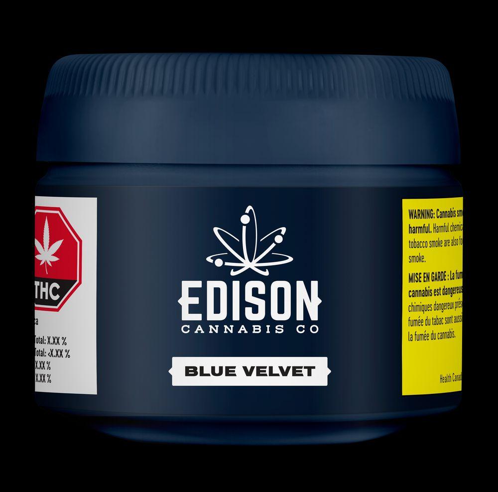 feature image Blue Velvet
