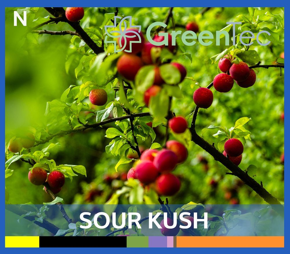 feature image Sour Kush