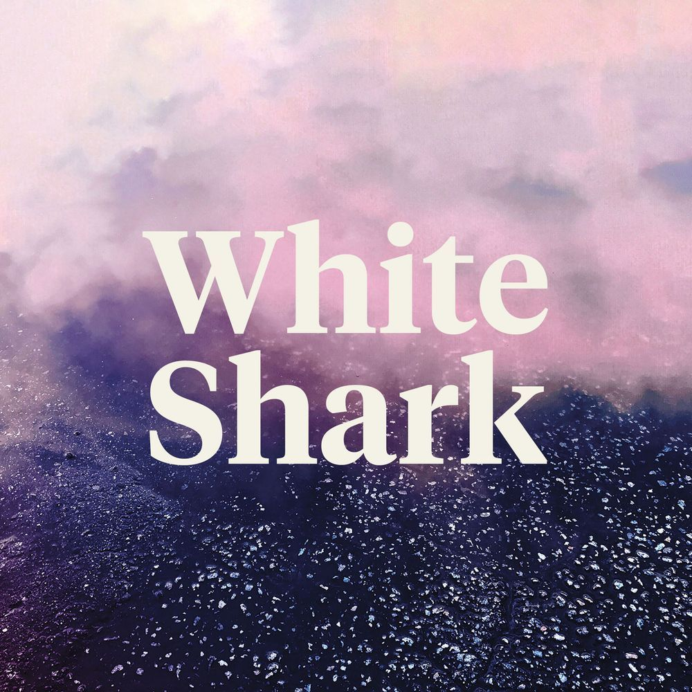 feature image White Shark